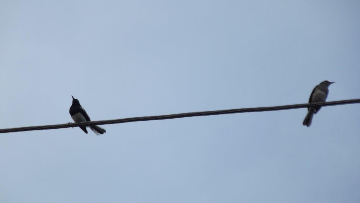 Free stock photo of love birds, pairs