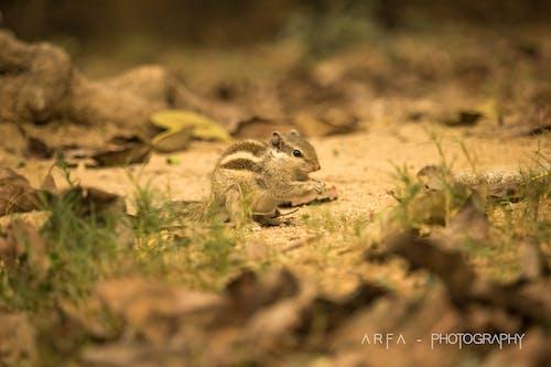 Gratis stockfoto met beest, dierenfotografie, eekhoorn