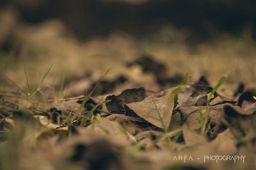 Gratis stockfoto met gevallen bladeren, herfstbladeren