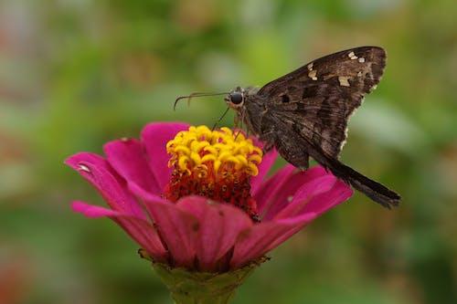 Butterfly pollinating flower in garden