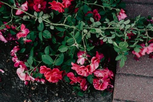 Imagine de stoc gratuită din arbust, botanic, centrale