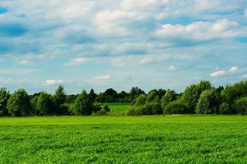 Photos gratuites de agriculture, atmosphère de soirée, atmosphérique