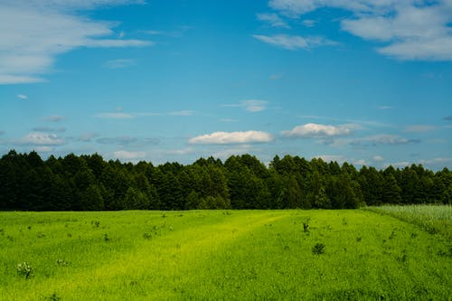 Photos gratuites de agriculture, arbre, atmosphère de soirée