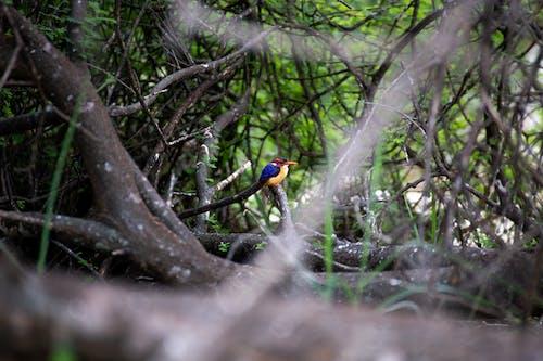 Blue and Orange Bird on Tree Branch