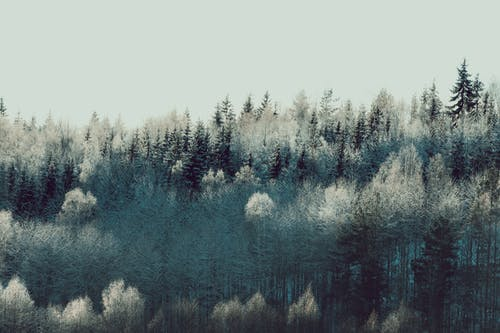 Foto stok gratis alam, batang pohon, beku
