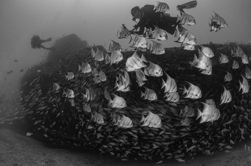 Grayscale Photo of Fishes on Water