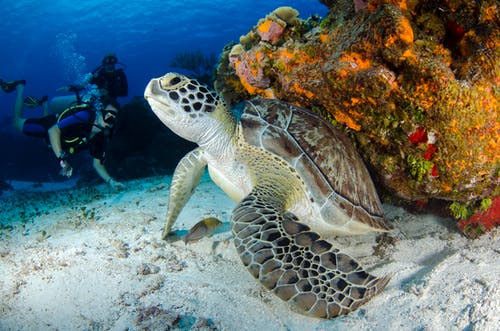 Brown and Black Turtle on Seabed