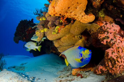 Kostnadsfri bild av akvarium, djup, dyka