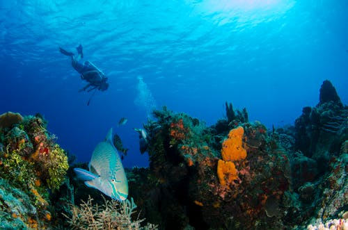 Kostnadsfri bild av djup, dyka, dykare
