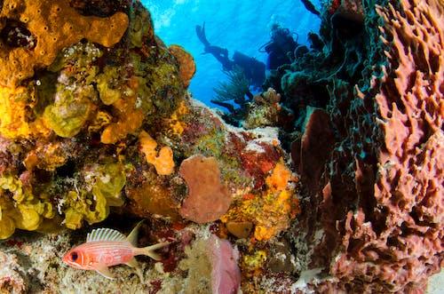 Kostnadsfri bild av djup, dyka, dykning