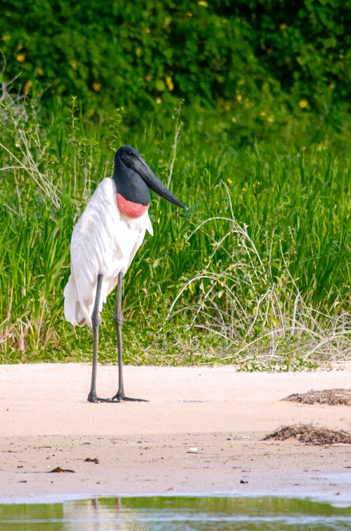 White and Black Long Beak Bird on Brown Sand