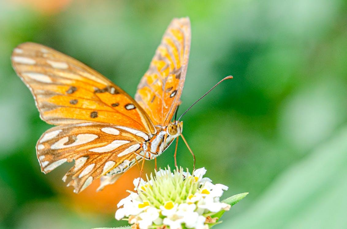 Immagine gratuita di ala, animale, colore