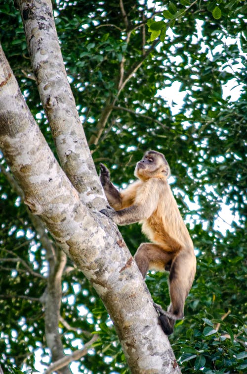 Brown Monkey on Tree Branch