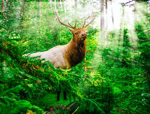 Безкоштовне стокове фото на тему «Альпійський, бик, бик лося»
