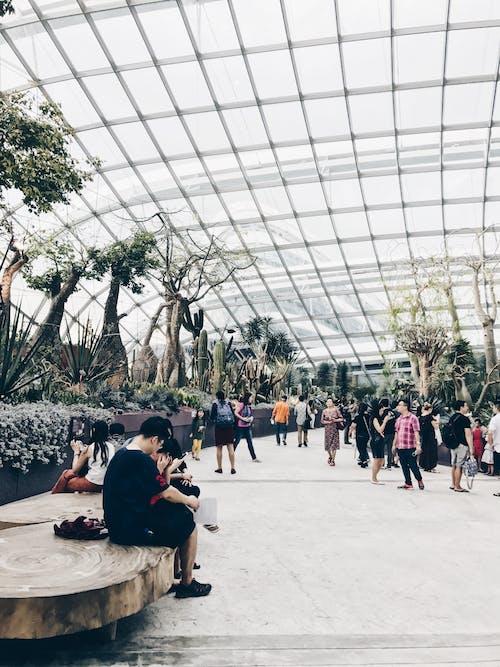 Imagine de stoc gratuită din botanic, centrale, clădire, grădină cu flori