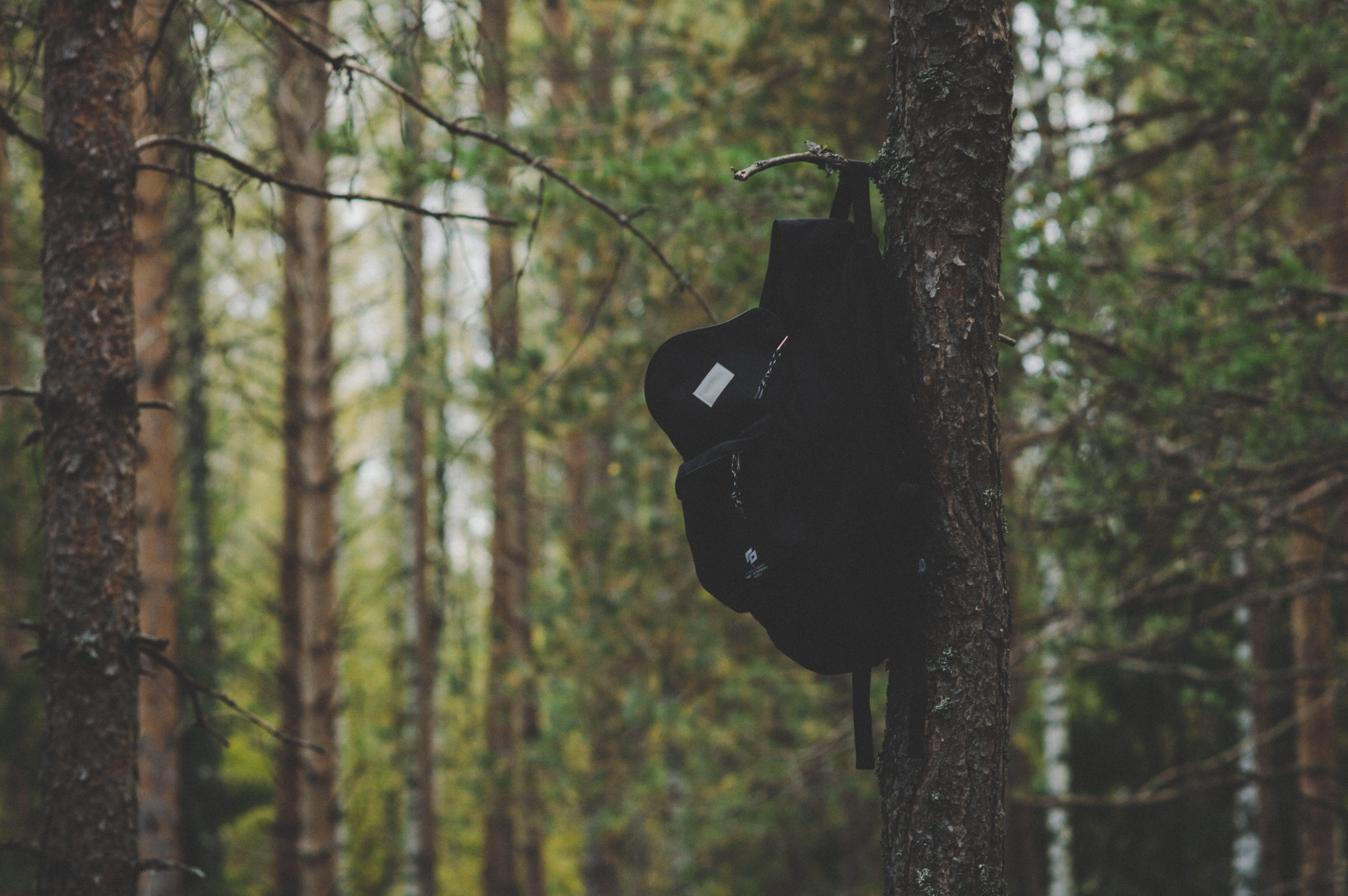 Gratis arkivbilde med bark, dagslys, fokus, grener