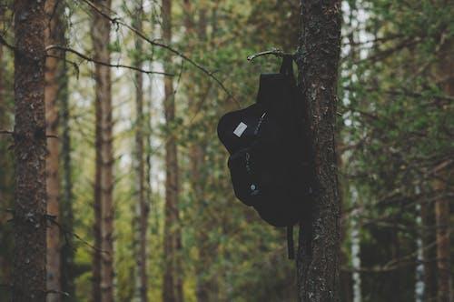 Gratis arkivbilde med bark, blader, dagslys, fokus