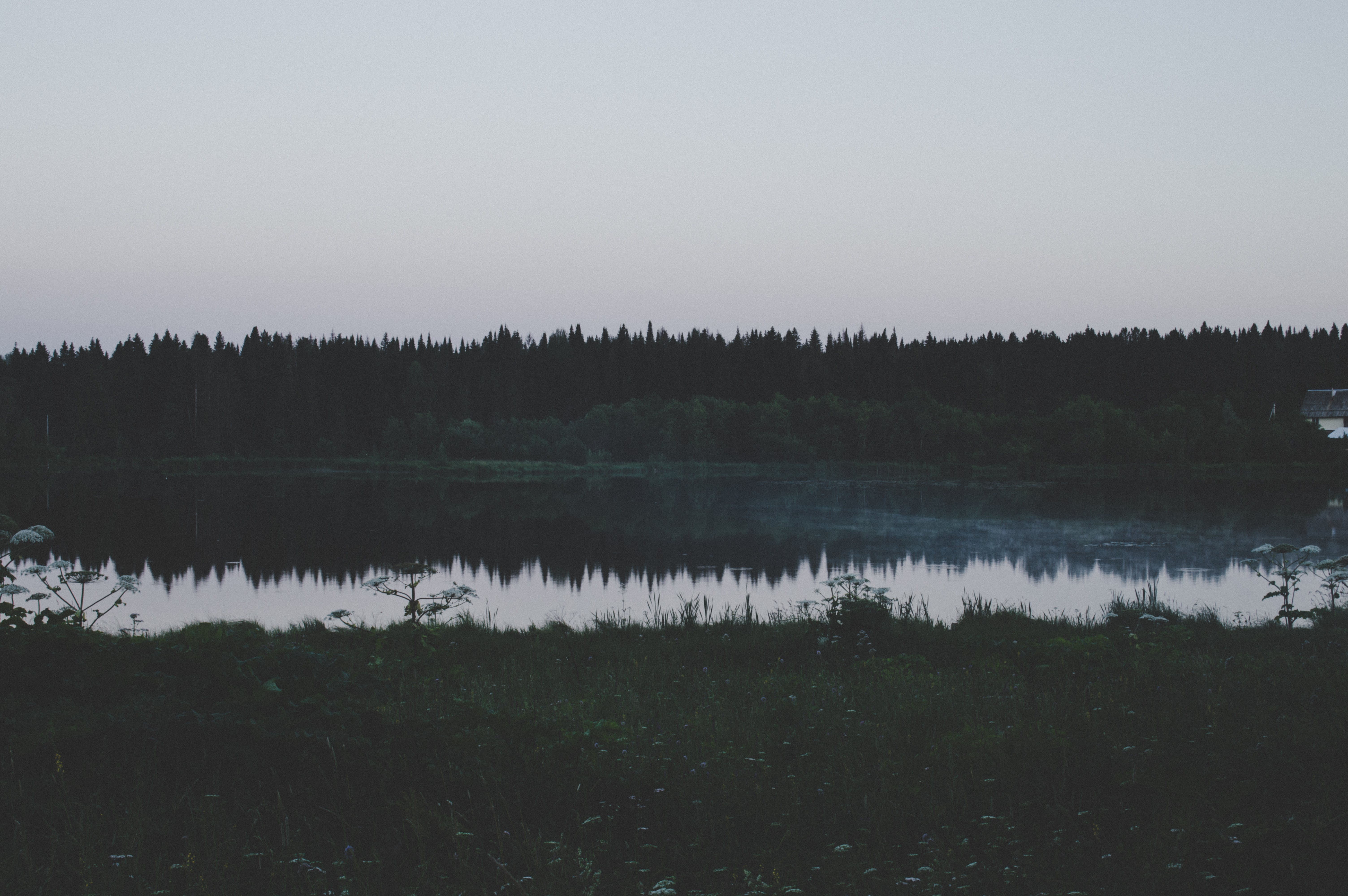 Darmowe zdjęcie z galerii z ciemny, drzewa, krajobraz, las