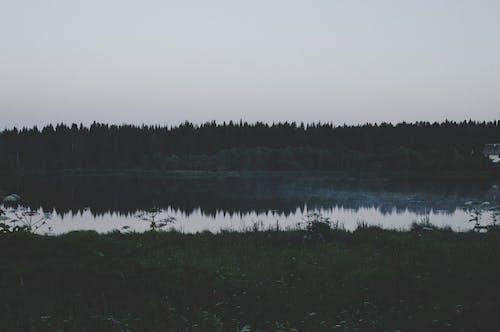 Foto stok gratis air, alam, bayangan, cairan