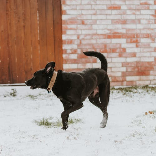 Free stock photo of animal, dog, pet