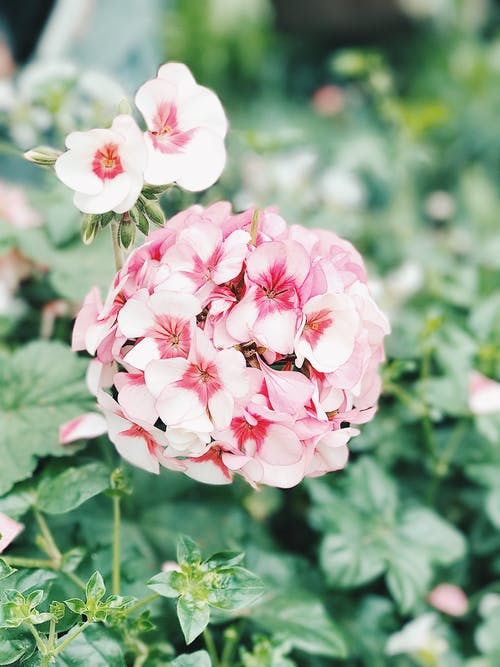 Pink Flowers in Shallow Photo