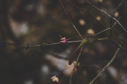 bulanık arka plan, bulanıklık, Çiçekler, karanlık içeren Ücretsiz stok fotoğraf