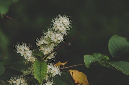 Бесплатное стоковое фото с ветви, завод, зеленый, красивый