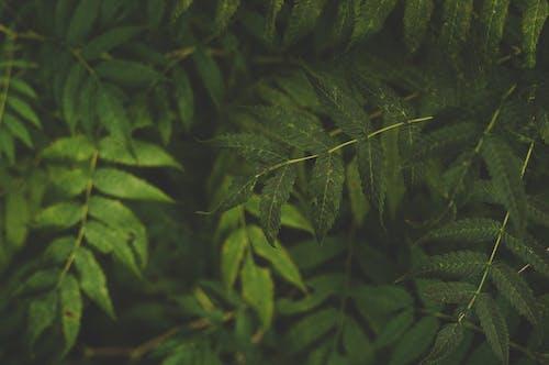 Безкоштовне стокове фото на тему «великий план, зелений, зростання, колір»