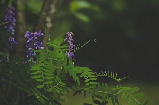 Green and Purple Leafed Plant