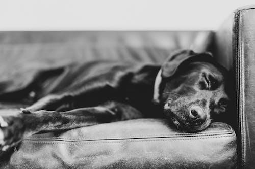 Black Short Coat Medium Dog Lying on Black and White Textile
