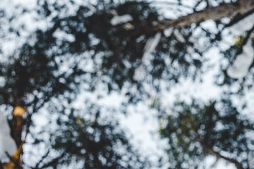 Foto profissional grátis de ao ar livre, árvore, borrão, cênico