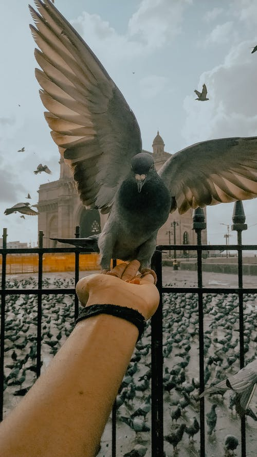 Crop unrecognizable person feeding pigeon from hand near fence and square with temple in city street in daylight