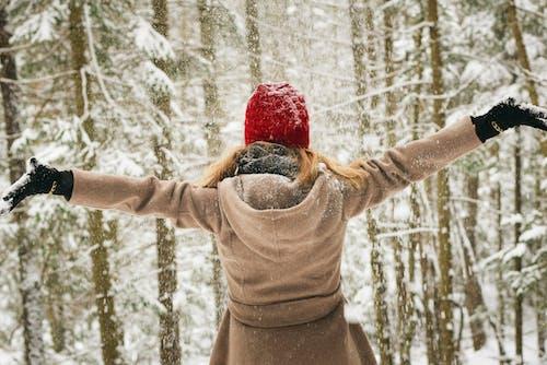 Gratis lagerfoto af forkølelse, frossen, frost, handsker