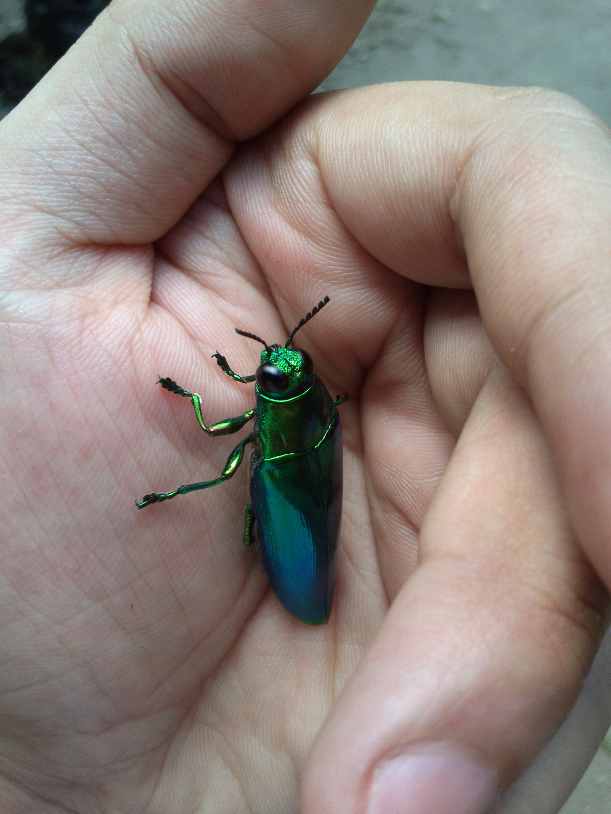 Green Metallic Beetle on Hand