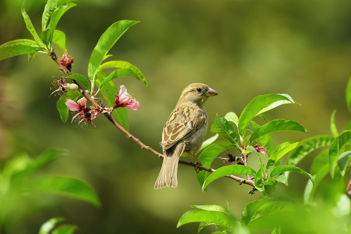 Pequeño Pájaro Gris Sobre Hojas Verdes
