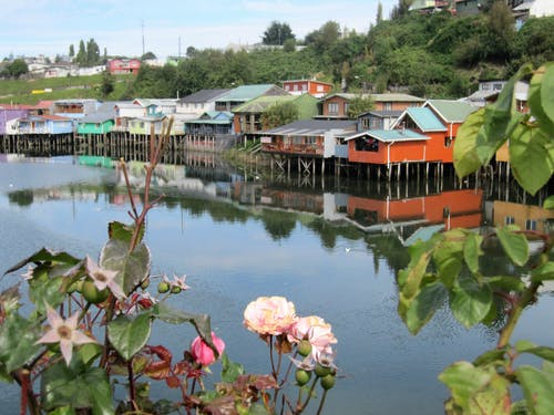 Free stock photo of body of water, chile, flowers