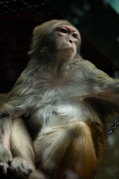 Free stock photo of monkey sitting, zoo