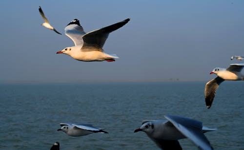 White and Gray Bird Flying over the Sea