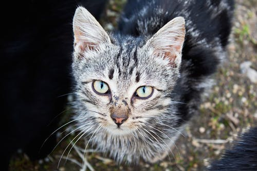 Photos gratuites de animal, animaux, chat, chaton