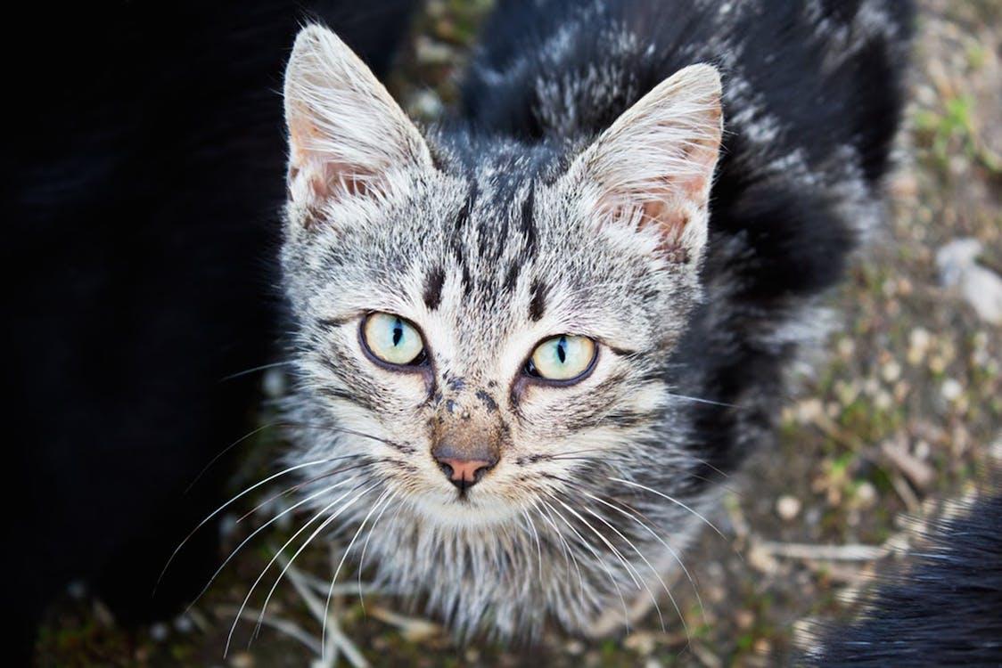고양이, 귀여운, 눈의 무료 스톡 사진