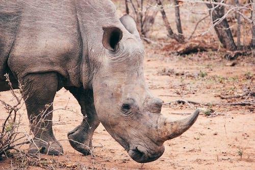 Photos gratuites de animal, buisson, cadre africain