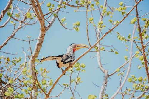 Photos gratuites de afrique, animal, branches d'arbre