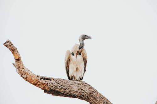 Photos gratuites de afrique, animal, animal sauvage