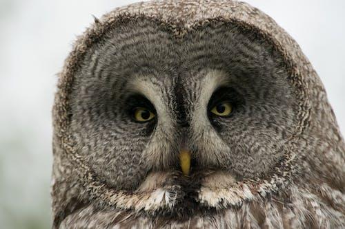 凝視, 動物, 動物園 的 免費圖庫相片
