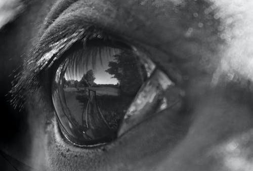 Free stock photo of animal eye, horse