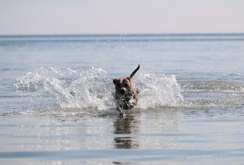 Gratis lagerfoto af hav, hund, vandsprøjt