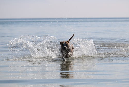 Free stock photo of dog, sea, water splash