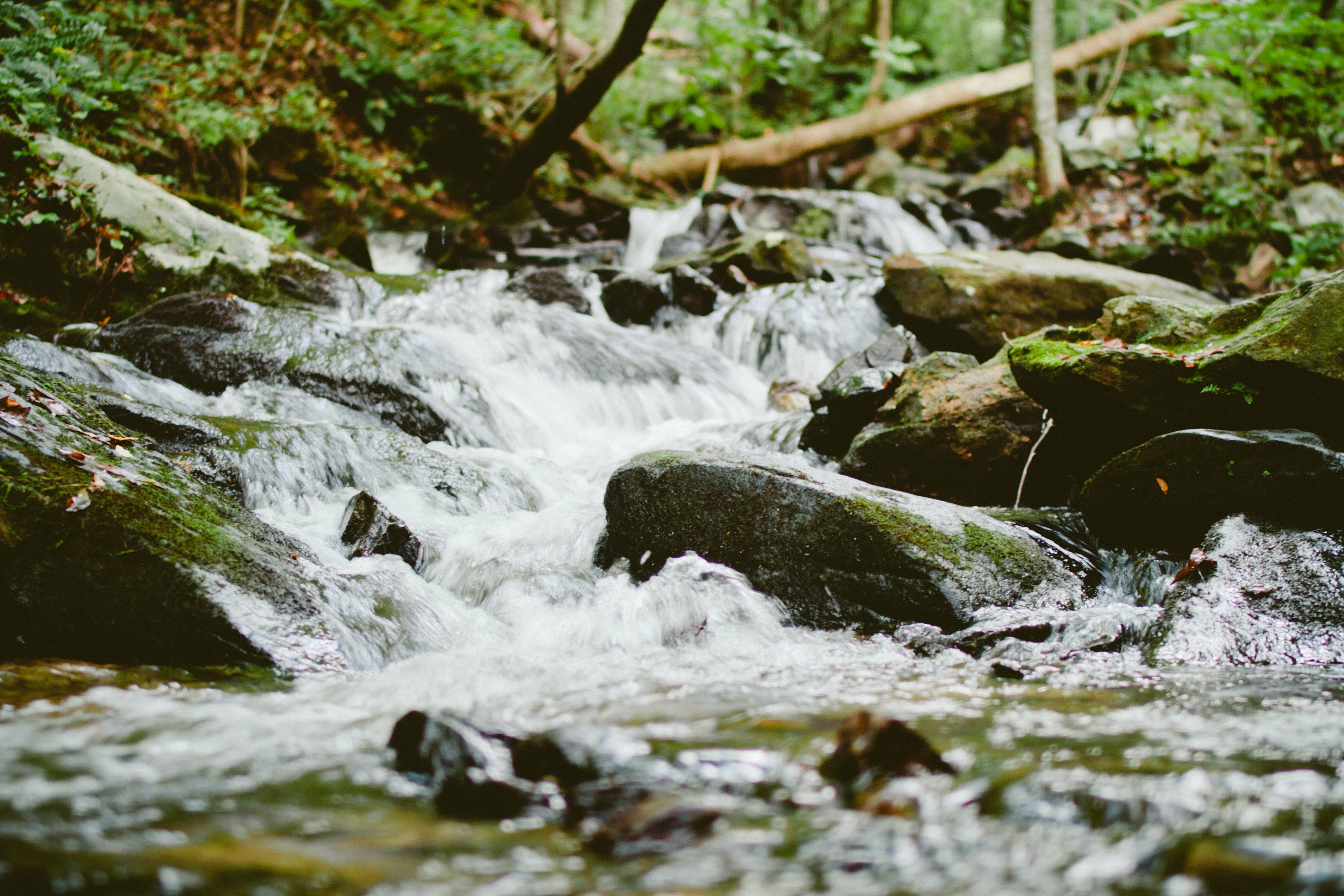 Free stock photo of nature, water, stream, river