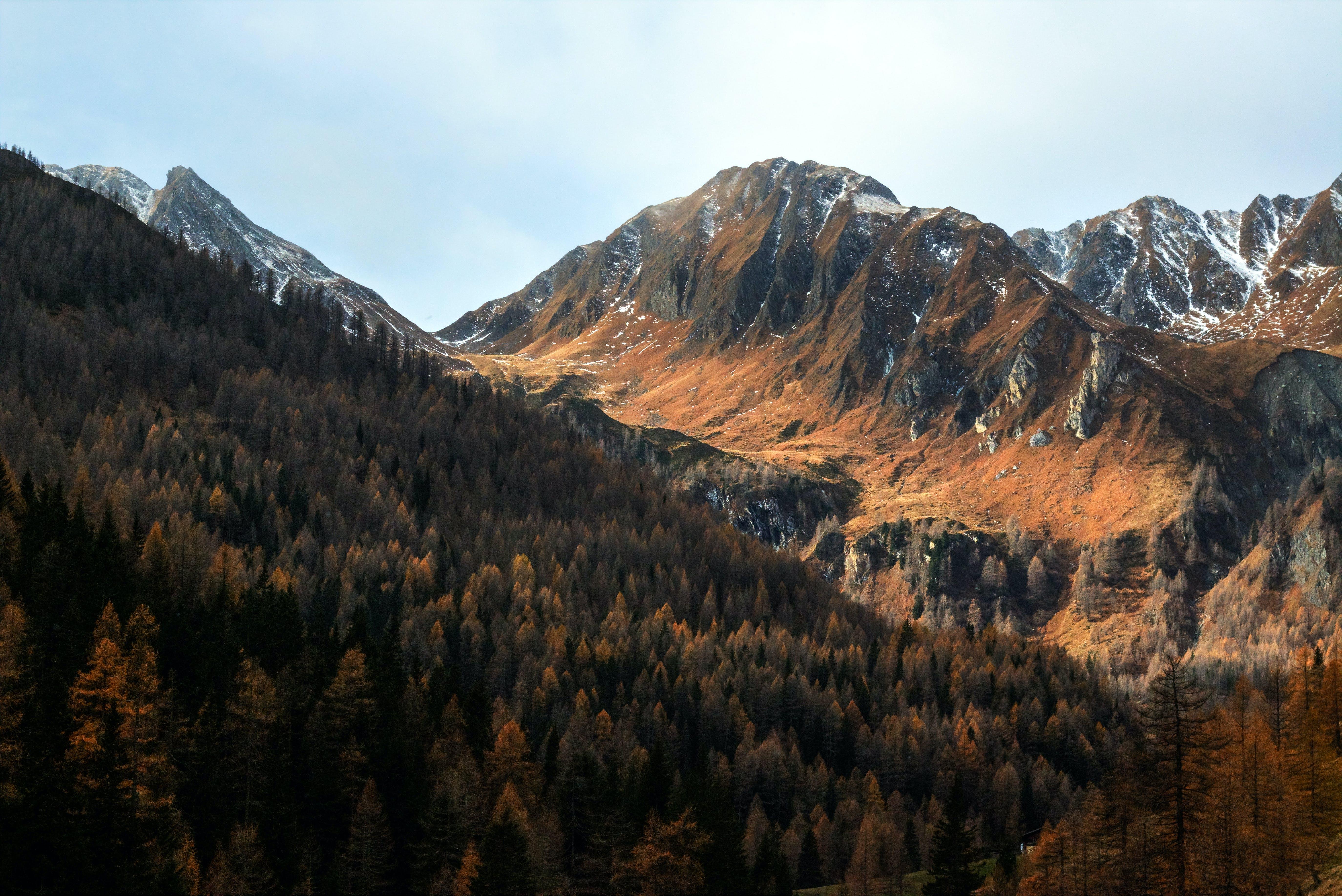 Ingyenes stockfotó ég, erdő, évszak, fák témában