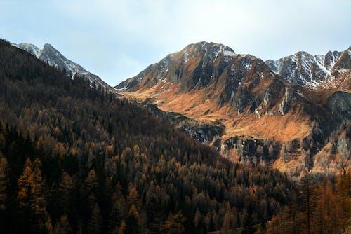 ağaçlar, çam ağaçları, çevre, dağlar içeren Ücretsiz stok fotoğraf